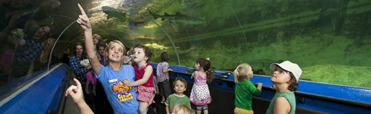 Kids viewing sea life at aquarium
