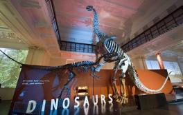 恐竜、オーストラリア博物館