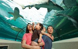シドニー水族館、ダーリング・ハーバー